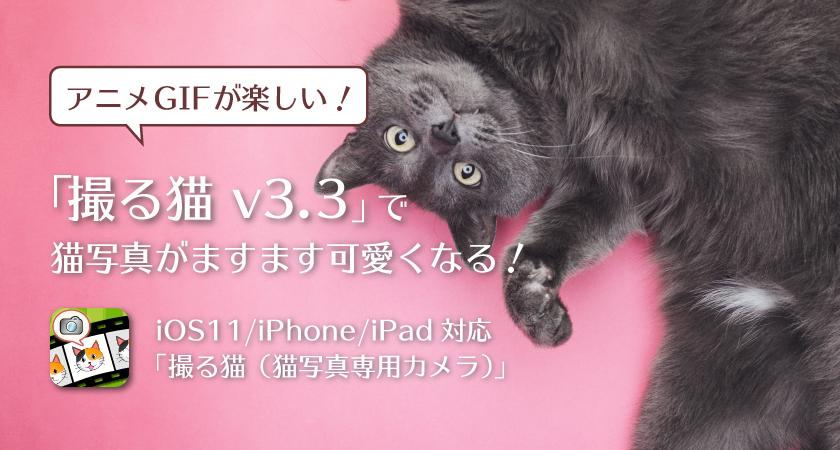 アニメGIFが楽しい!撮る猫 v3.3で猫写真がますます可愛くなる!